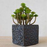 Moroccan Black Quartrefoil Concrete Pot Planter (4)