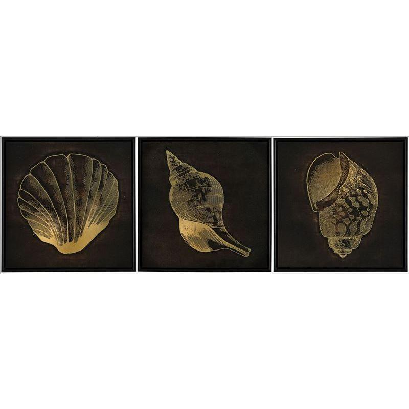 Set Of 3 Coastal Shells Framed Canvas Print Wall Art