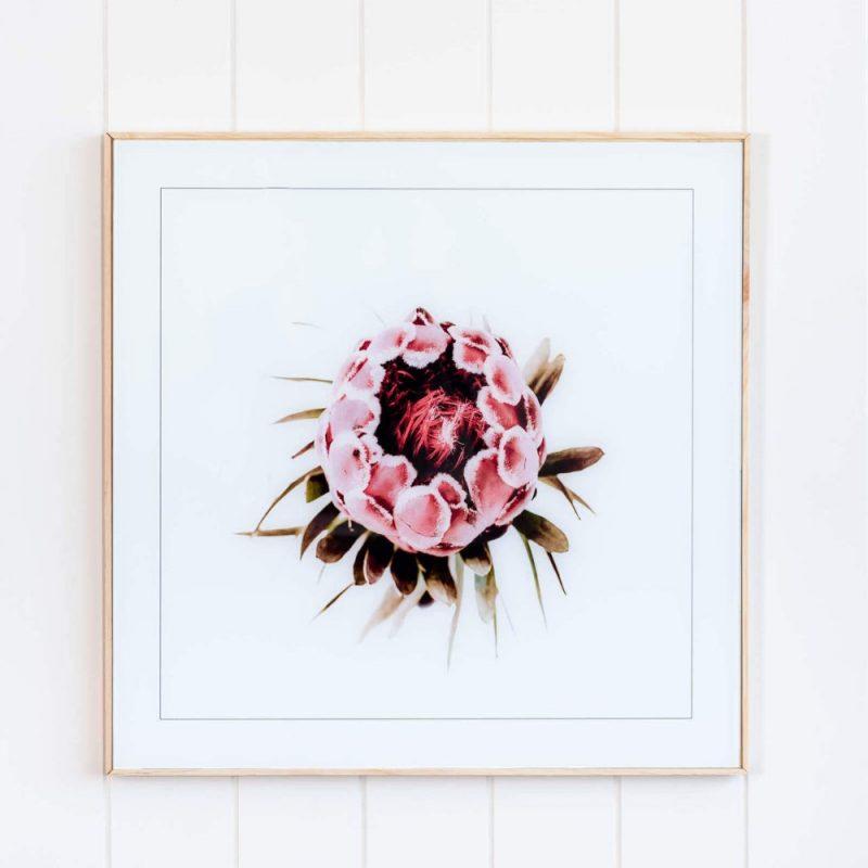 Pink Protea Flower Floral Framed Glass Wall Art