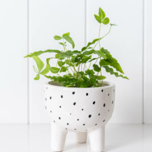Black and White Spotted Ceramic Pot Planter On Legs