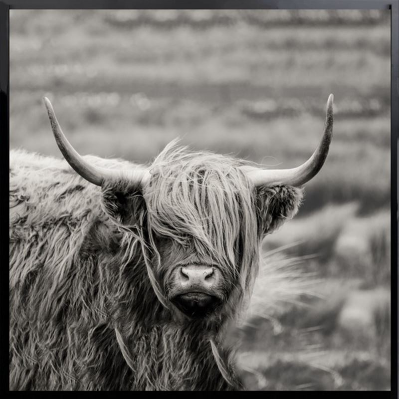Monochrome Scottish Highland Cow Framed Canvas Print Wall Art