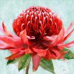 Australian Waratah Flower Framed Canvas Print Wall Art