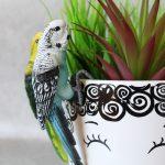 Australian Budgie Bird Pot Sitter 1