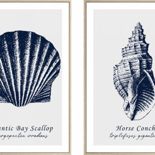 Hamptons Navy Blue Beach Shells Duo Framed Canvas Print Wall Art
