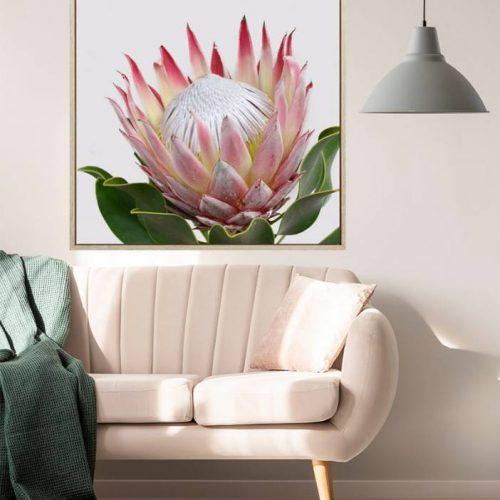 Pink Protea Flower Framed Canvas Print Wall Art