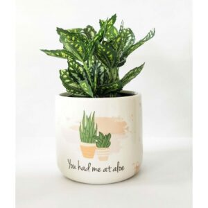 Aloe Quote Ceramic Planter