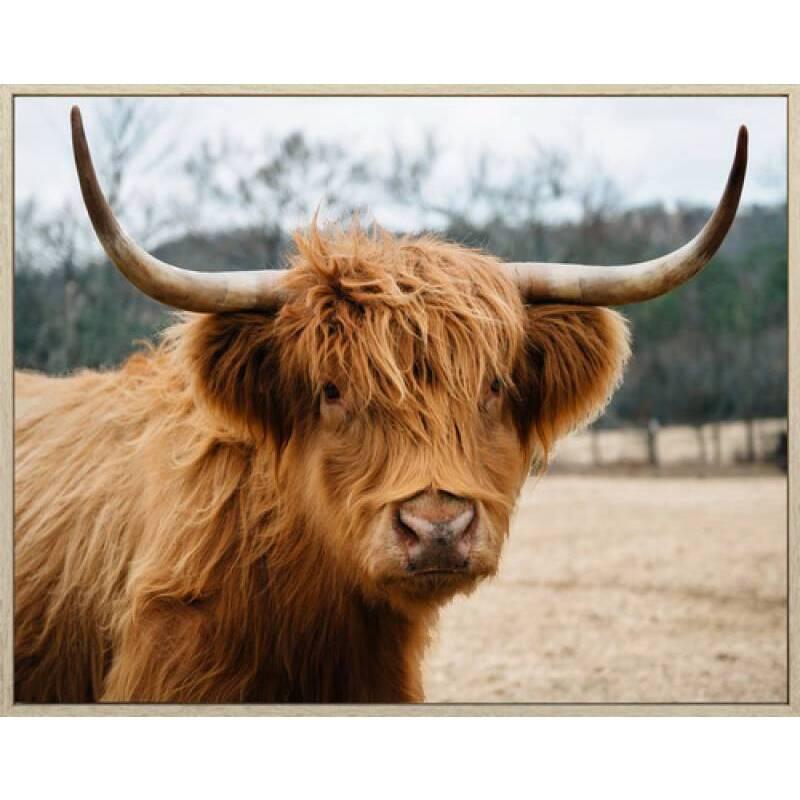 Brown Highland Cow Framed Canvas Print Wall Art