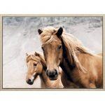 Brown Horse Duo Canvas Print Wall Art