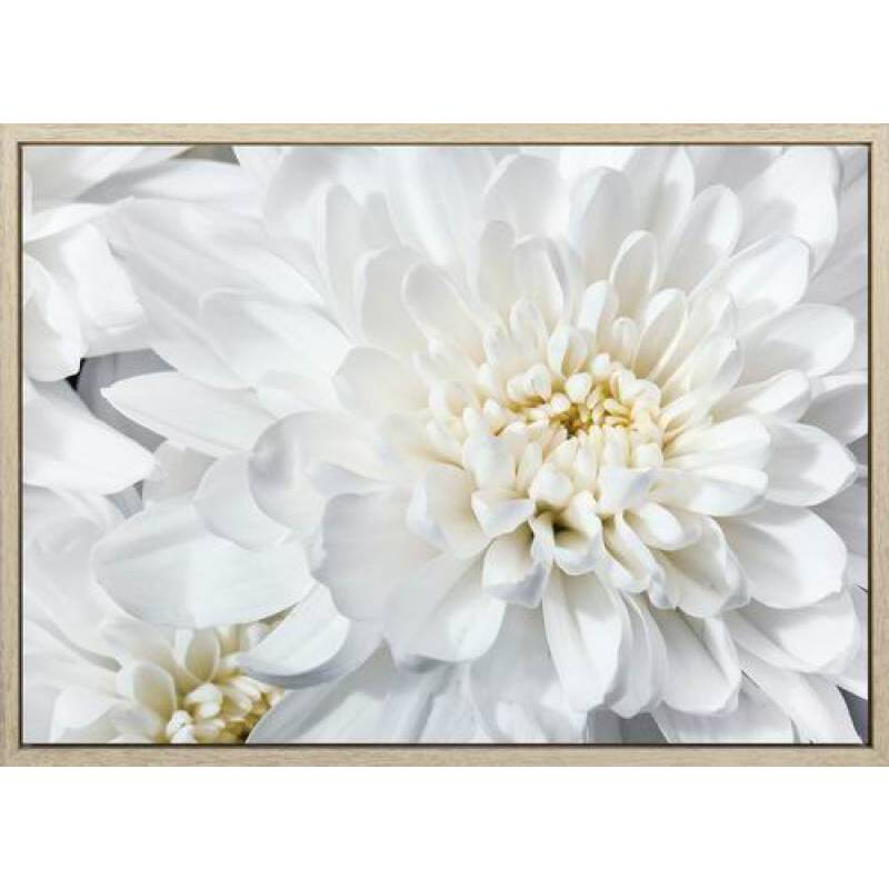 Chrysanthemums Mums Flower Canvas Print Wall Art