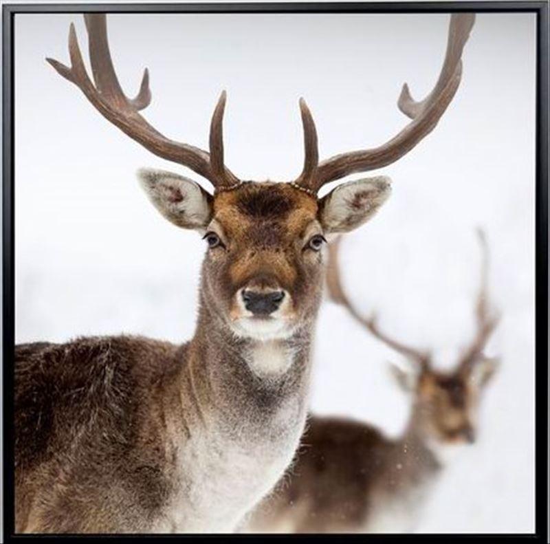 Brown Deer Framed Canvas Print Wall Art