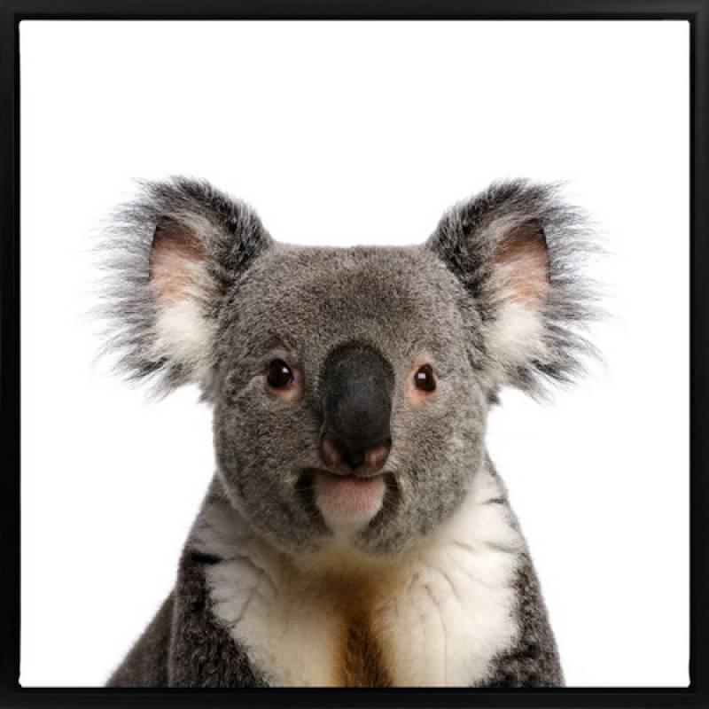 Koala Animal Framed Canvas Print Wall Art
