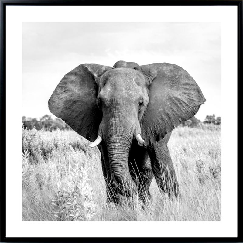 Monochrome Elephant Framed Canvas Print Wall Art