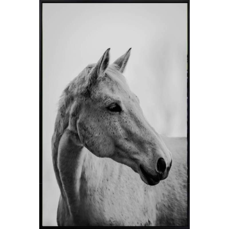Set of 2 Horse Framed Canvas Print Wall Art