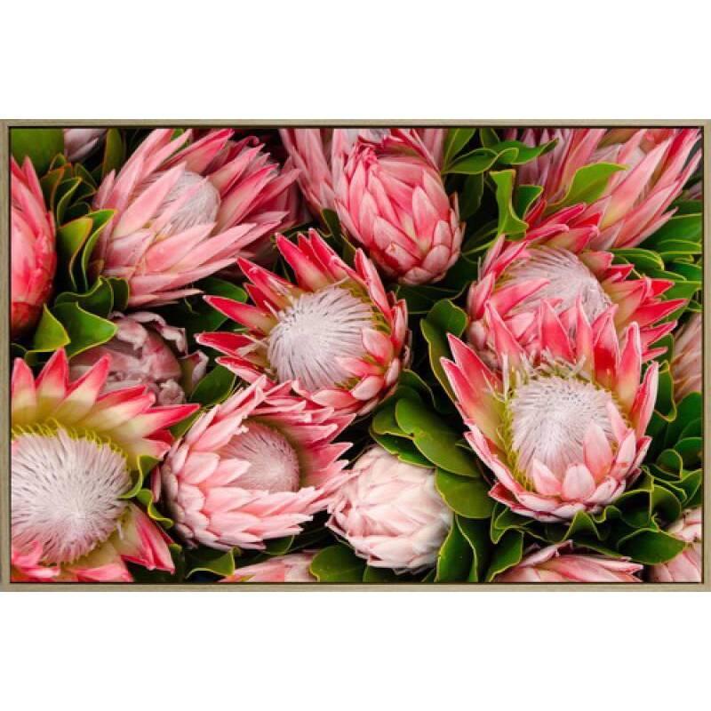 Protea Flower Bunch Framed Canvas Wall Art
