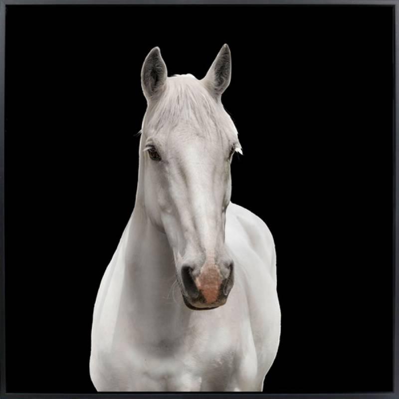 White Horse Framed Canvas Wall Art