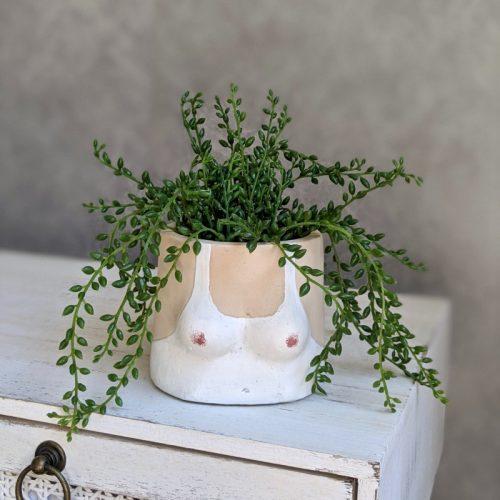 Boobies Cement Pot Planter