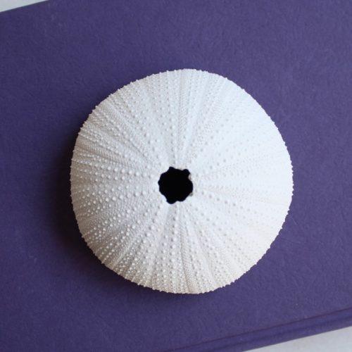 Coastal White Urchin Decor Ornament - Set of 3